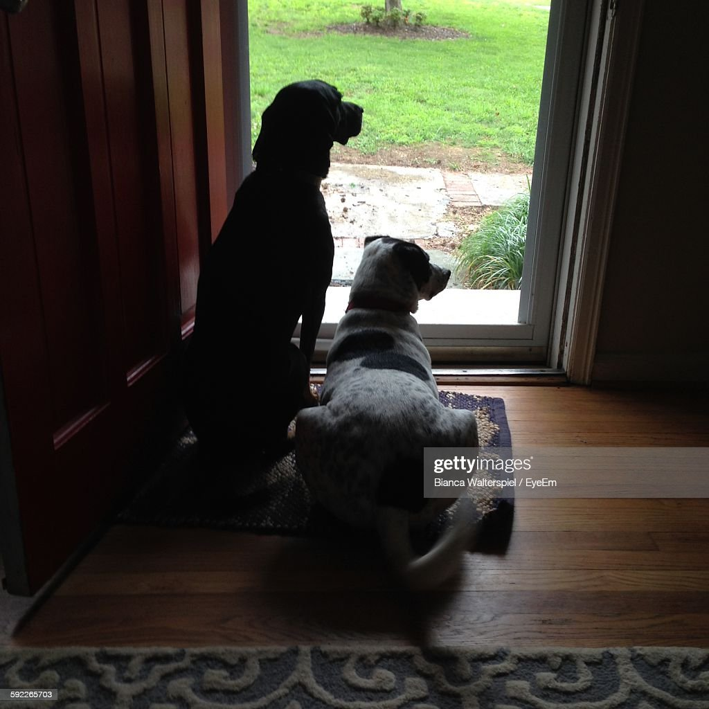 Rear View Of Dogs Looking Through Glass Door At Home Stock Photo