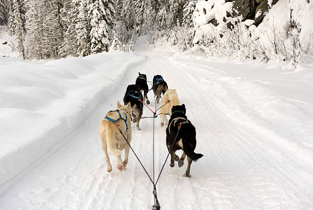 Rear View Of Dogs Pulling A Sled Through Snow Wall Art