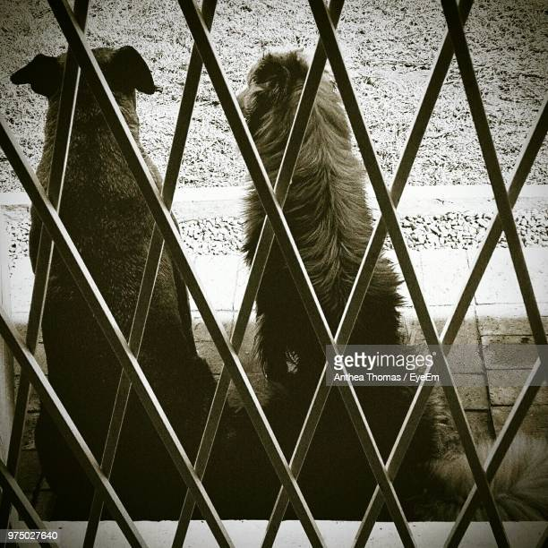 Rear View Of Dogs Seen Through Fence
