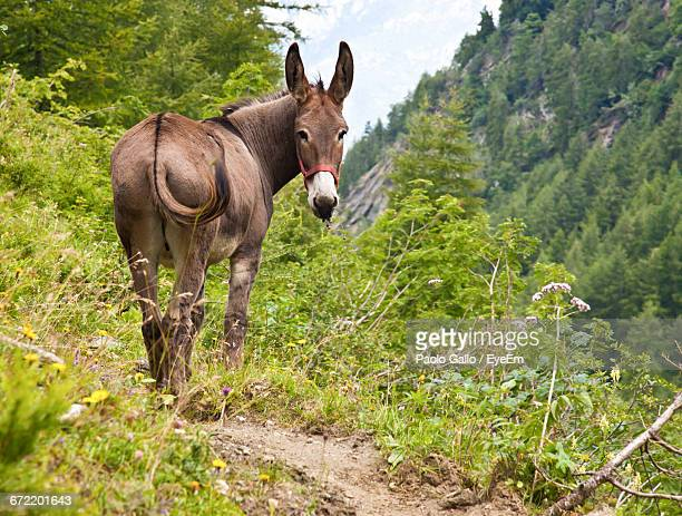 Rear View Of Donkey Standing On Field