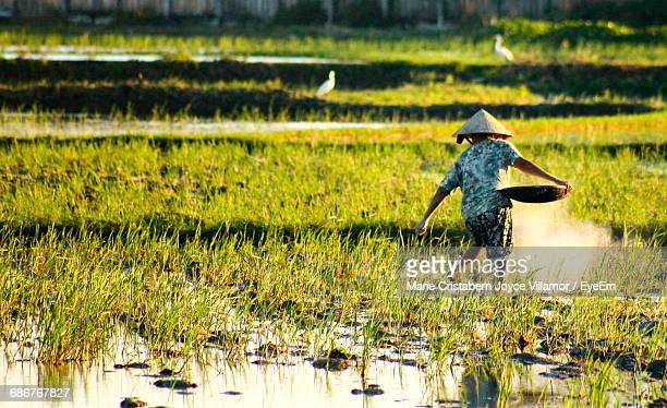 Rear View Of Farmer Working At Rice Paddy