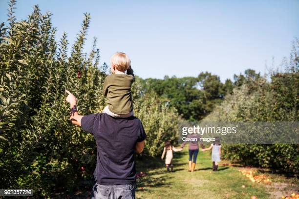 rear view of father carrying son on shoulder while standing in apple orchard - orchard stock pictures, royalty-free photos & images