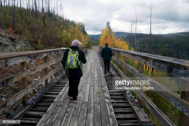 rear view of female friends walking on footbridge against trees - kelowna stock pictures, royalty-free photos & images