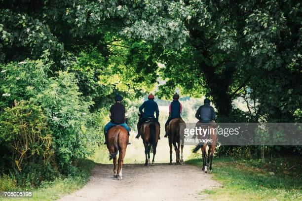 rear view of four riders on horses riding along a path. - oxfordshire stock pictures, royalty-free photos & images