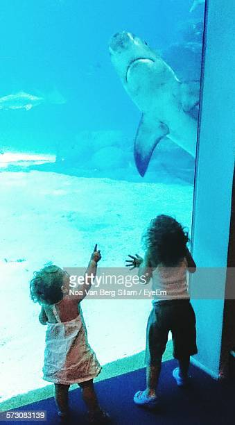 Rear View Of Girl And Boy Standing By Glass At Aquarium