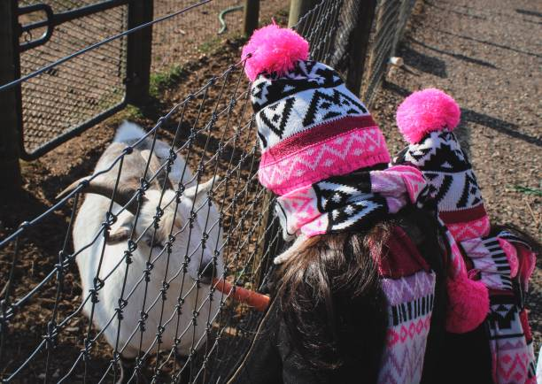 Rear View Of Girl Feeding Carrot To Goat At Field