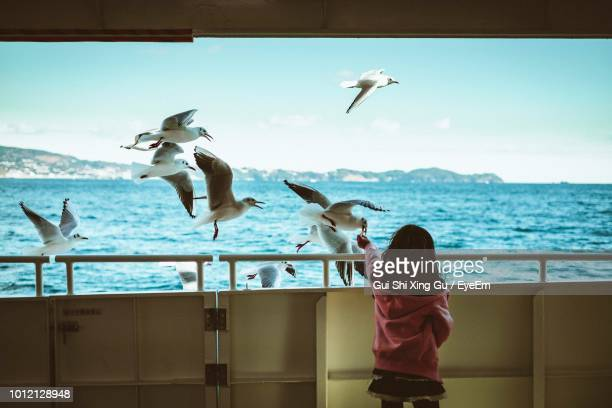 rear view of girl feeding seagulls flying over sea - 多数の動物 ストックフォトと画像