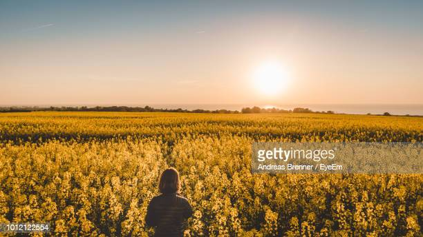 rear view of girl standing at farm against sky - andreas solar stock pictures, royalty-free photos & images