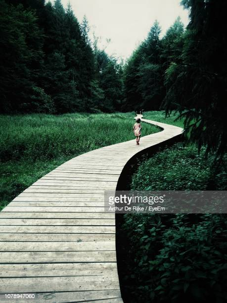 rear view of girl walking amidst by trees - arthur stock pictures, royalty-free photos & images