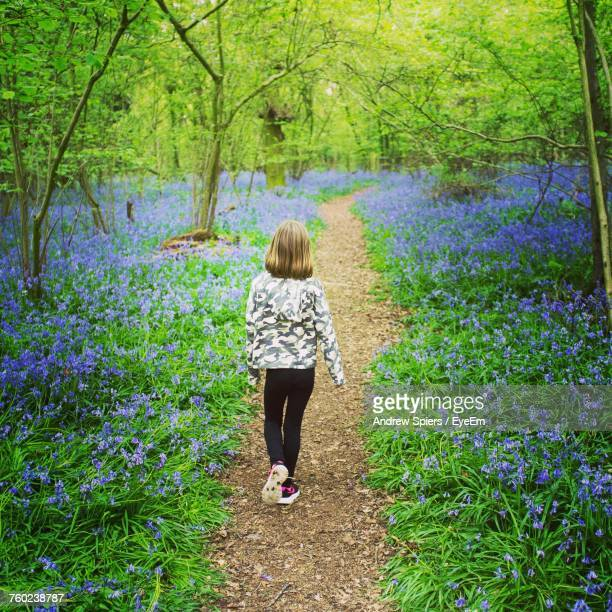 rear view of girl walking on footpath at bluebell wood - bluebell wood stock pictures, royalty-free photos & images