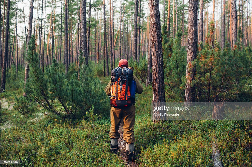 Rear view of hiker walking in forest : Stock Photo