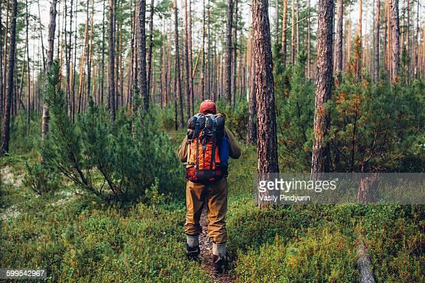 Rear view of hiker walking in forest