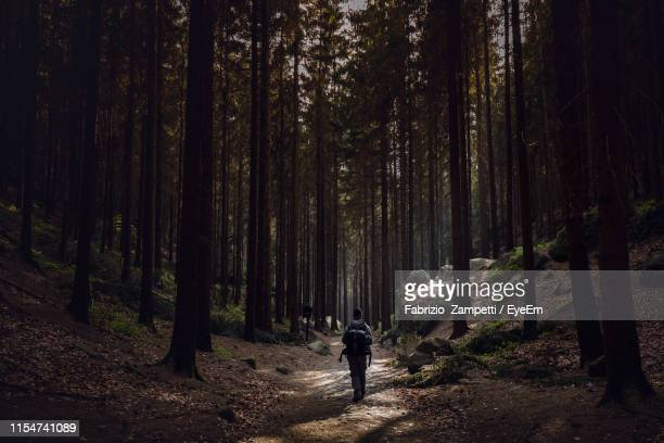 rear view of hiker walking on footpath in forest - fabrizio zampetti foto e immagini stock