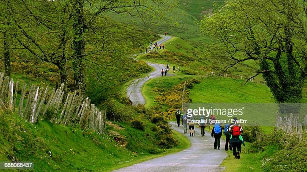 rear view of hikers walking on road amidst trees - saint jean pied de port stock photos and pictures