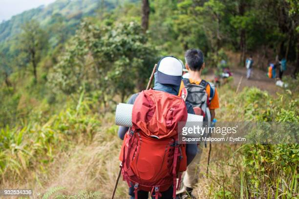 Rear View Of Hikers With Backpacks Walking On Mountain At Forest