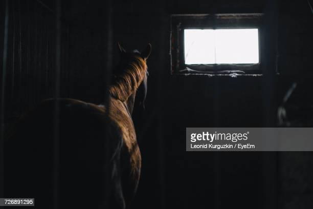 Rear View Of Horse In Stable