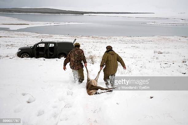 Rear View Of Hunters Pulling On Red Deer On Snowcapped Field