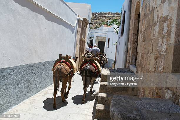 Rear View Of Man And Boy By Donkeys On Footpath