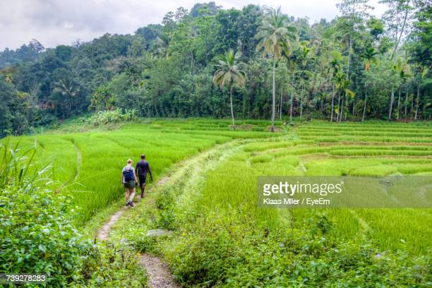 rear view of man and woman walking on pathway at agricultural field - kandy kandy district sri lanka stock photos and pictures