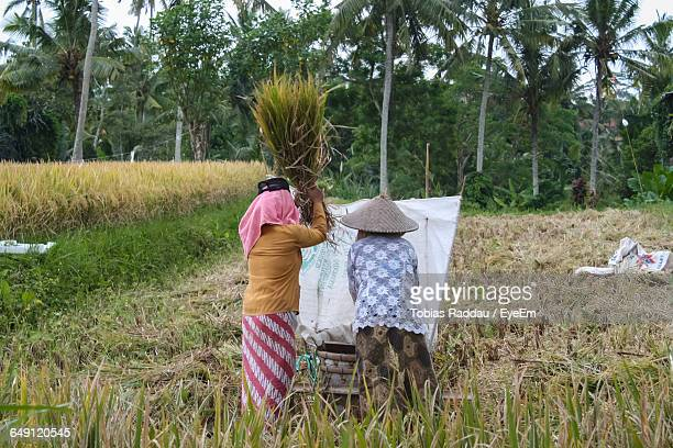 Rear View Of Man And Woman Working At Rice Paddy
