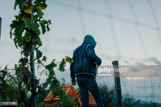 rear view of man carrying crate in vineyard - heshphoto photos et images de collection