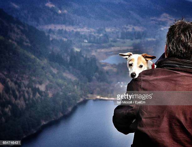 rear view of man carrying jack russell terrier on mountain by lake - jack russell terrier photos et images de collection