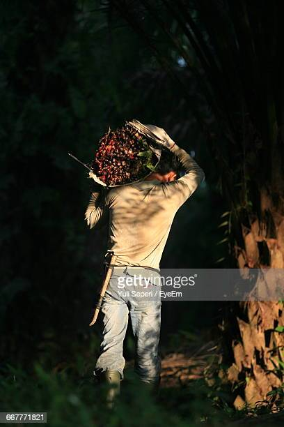 Rear View Of Man Carrying Oil Palm Fruits