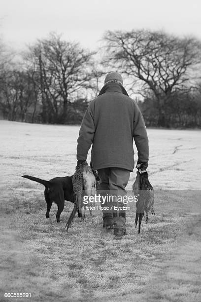 Rear View Of Man Holding Dead Pheasants While Walking With Hunting Dog On Field