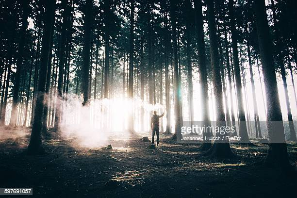 Rear View Of Man Holding Smoke Bomb By Trees At Forest