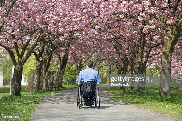 Rear view of man in wheelchair under blooming cherry trees