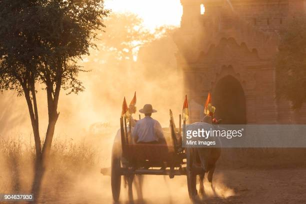 rear view of man on ox cart driving past pagoda at sunset. - ox cart fotografías e imágenes de stock