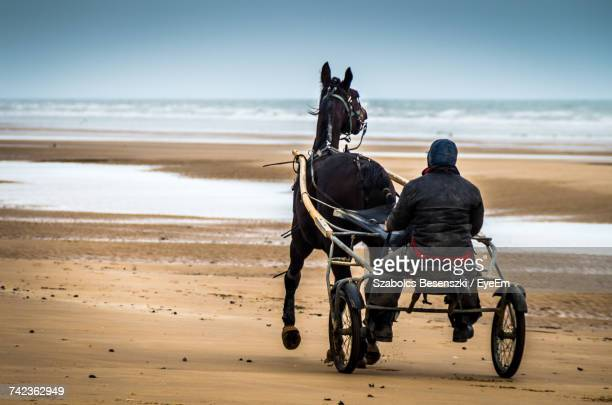 rear view of man riding horse cart on beach - animal powered vehicle stock photos and pictures