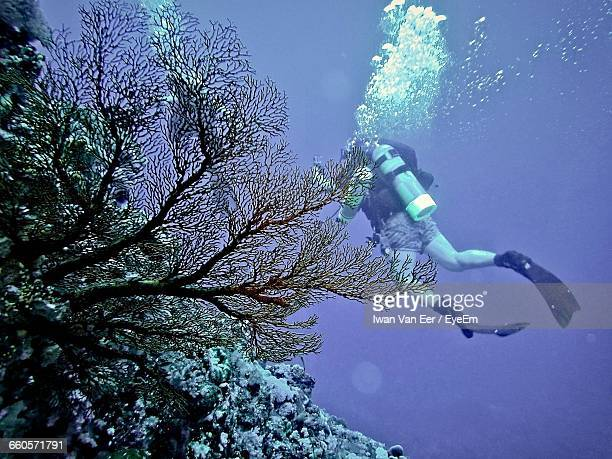 Rear View Of Man Scuba Diving Undersea
