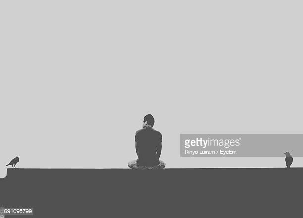 Rear View Of Man Sitting Amidst Birds On Retaining Wall Against Clear Sky
