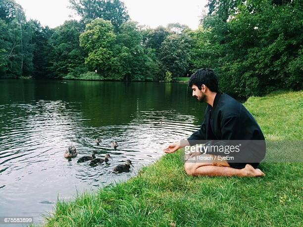 rear view of man sitting feeding ducks in park - duck bird stock pictures, royalty-free photos & images