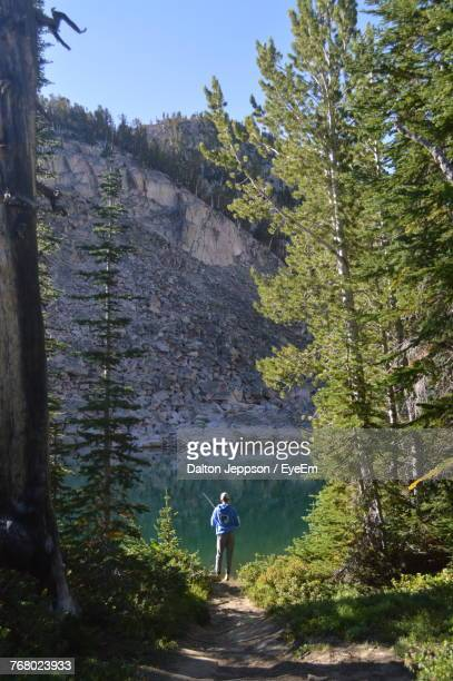 rear view of man standing amidst trees in forest - idaho falls stock photos and pictures