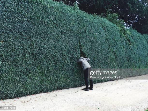 rear view of man standing by plant wall - curiosity stock photos and pictures