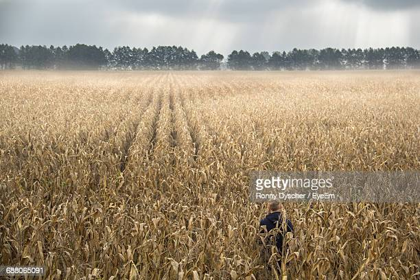 Rear View Of Man Standing Dry Corn Field Against Cloudy Sky