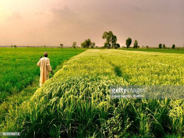 rear view of man standing in farm - nigerian men stock photos and pictures