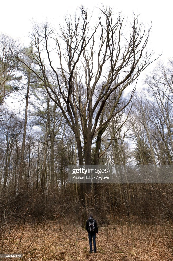 Rear View Of Man Standing In Forest Against Sky : Stock Photo