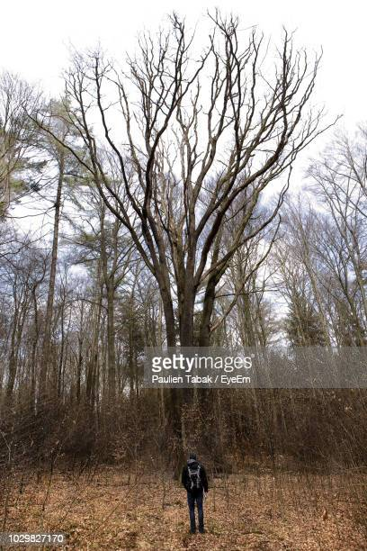 rear view of man standing in forest against sky - paulien tabak foto e immagini stock