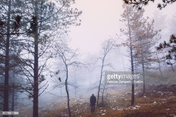 rear view of man standing in forest during foggy weather - fabrizio zampetti foto e immagini stock