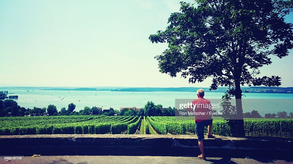 Rear View Of Man Standing In Front Of Vineyard Against Lake Constance : Stock Photo