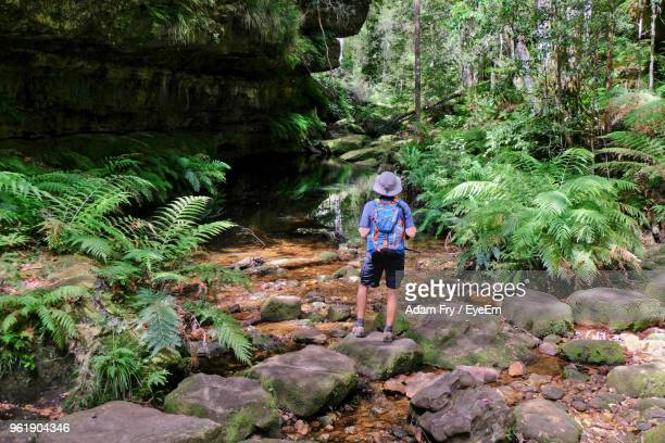 rear view of man standing on rock in forest - blue mountains national park stock pictures, royalty-free photos & images