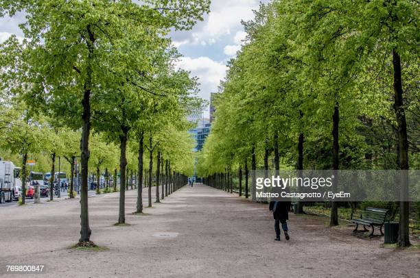 Rear View Of Man Walking Amidst Trees Against Sky