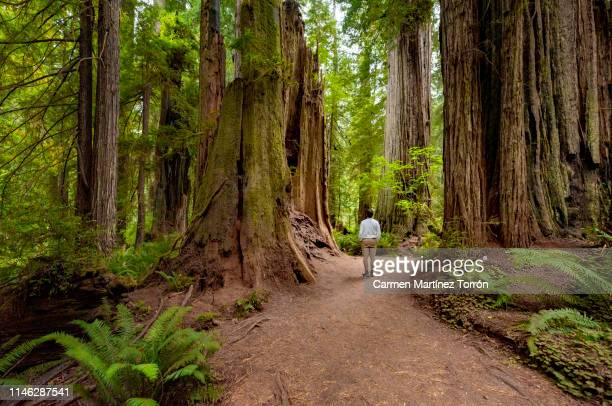 Rear View Of Man Walking At Forest in Redwoods National Park, USA.