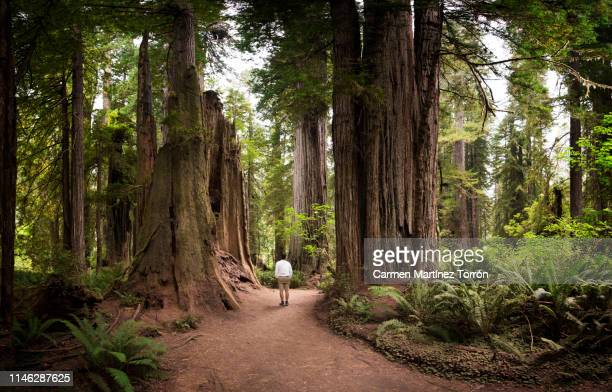 rear view of man walking at forest in redwoods national park, usa. - nature reserve stock pictures, royalty-free photos & images