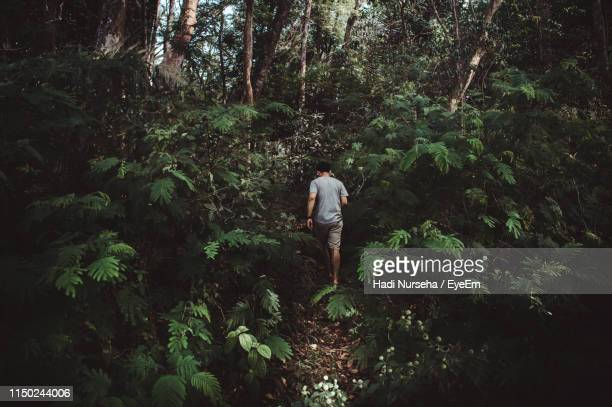 rear view of man walking in forest - 熱帯雨林 ストックフォトと画像