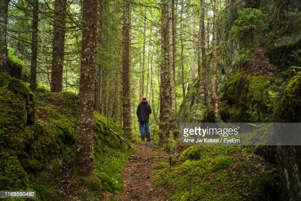 rear view of man walking in forest - arne jw kolstø stock pictures, royalty-free photos & images