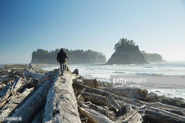 rear view of man walking on fallen tree carrying tripod, rialto beach, washington state, usa - olympic park stock pictures, royalty-free photos & images